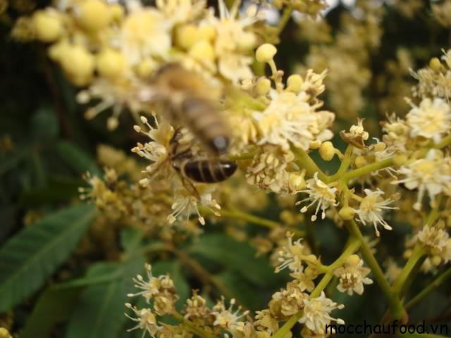 Những loại mật ong Mộc Châu thơm ngon nhất