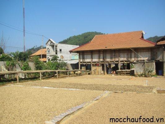 cà phê Arabica Sơn La.