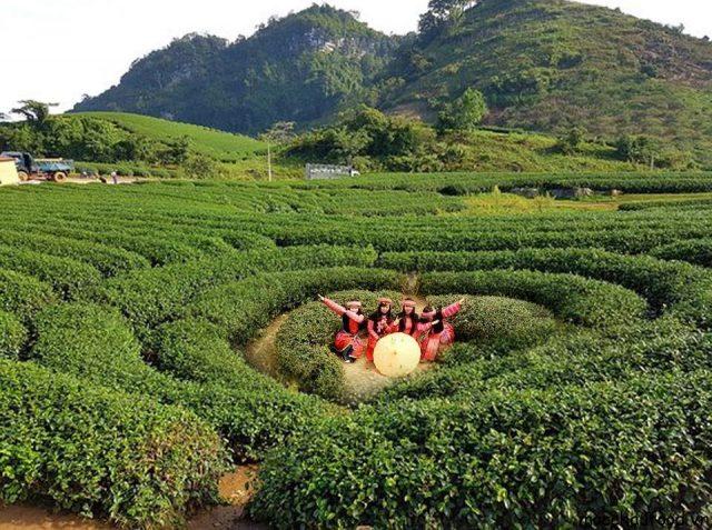 Chia sẻ kinh nghiệm du lịch Mộc Châu tự túc từ A đến Z - 5