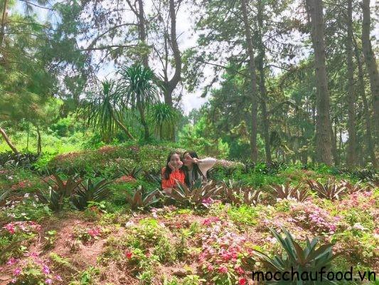 Checkin tại rừng thông bản Áng Mộc Châu