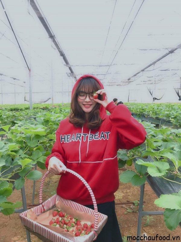 Em là cô gái hái dâu tây Mộc Châu