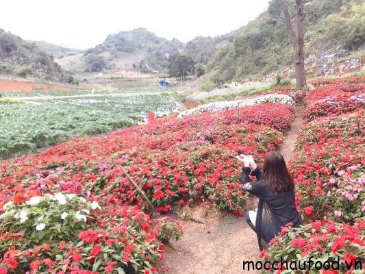 """Đây là """" Rừng hoa"""" Chimifarm nhé các bạn"""
