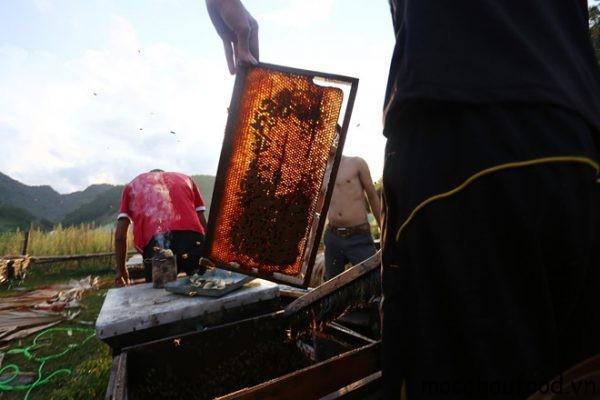 Cách thức để lấy được mật ong