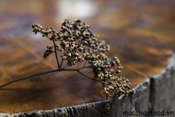 Tại sao hạt Mắc khén là Linh hồn trong các món ăn đặc sản Tây Bắc ?