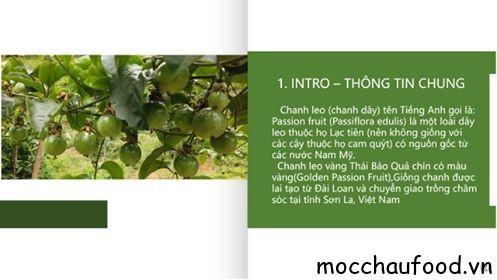 Chanh leo vàng Mộc Châu, đặc sản mới trên cao nguyên