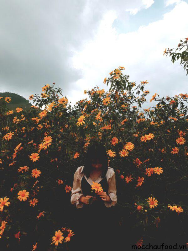 Tháng 12- Tháng của hoa Dã Qùy